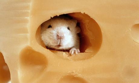 cheese460